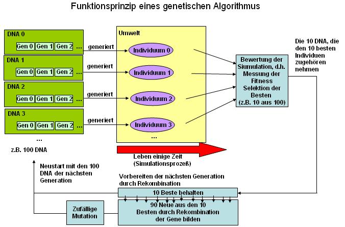Evolutionärer Algorithmus